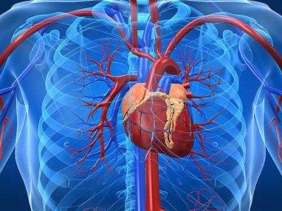 heartu electic power human body proizvodnja elektricne energije automatika.rs
